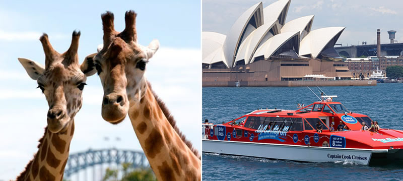 Taronga Zoo | 24hr Hop On Hop Off Ferry Pass