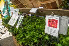 View Event: Albany Farmers Market