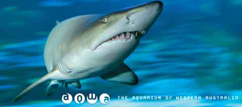 AQWA | The Aquarium of Western Australia